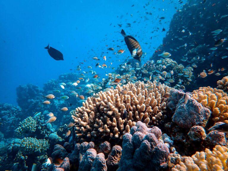 Scuba diving Langkawi, Malaysia