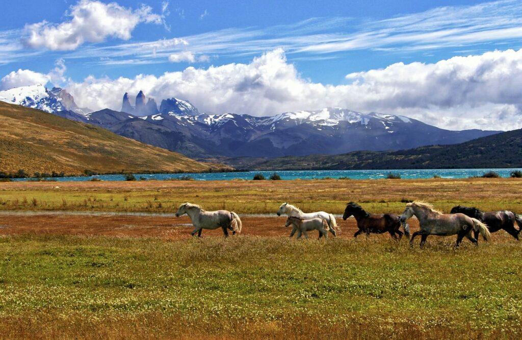 The great pantagonian trail,Laguna Azul, Chile