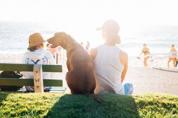 dog sitting in Christchurch