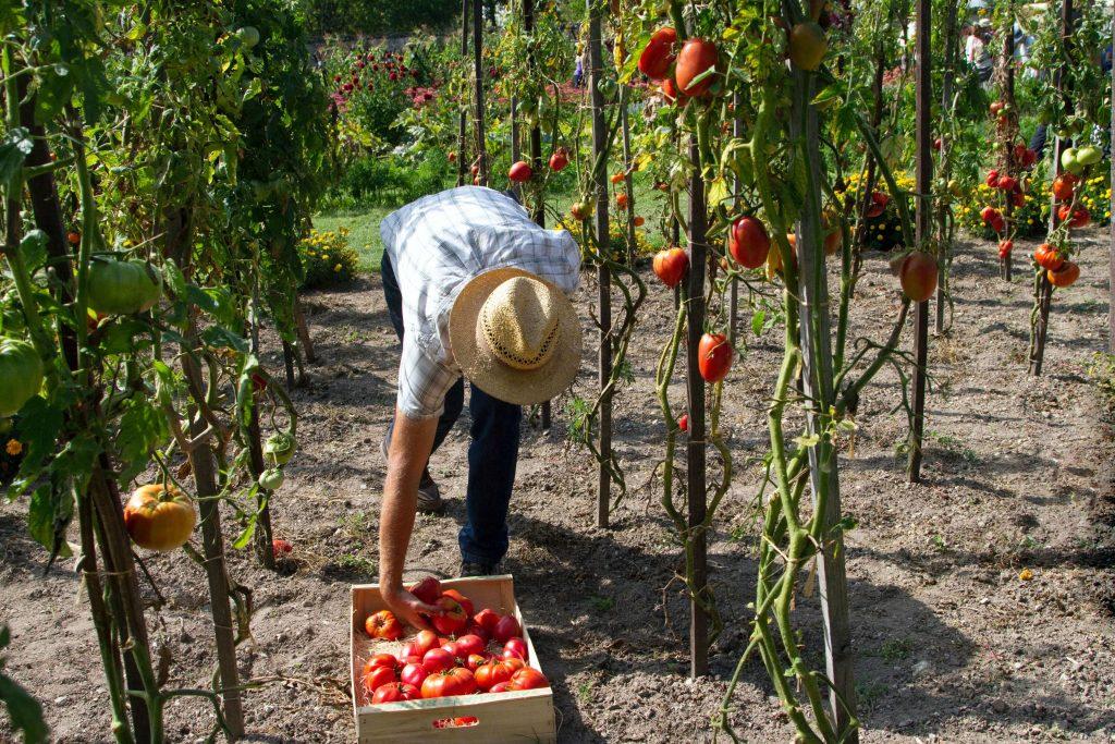 fruit picking jobs italy