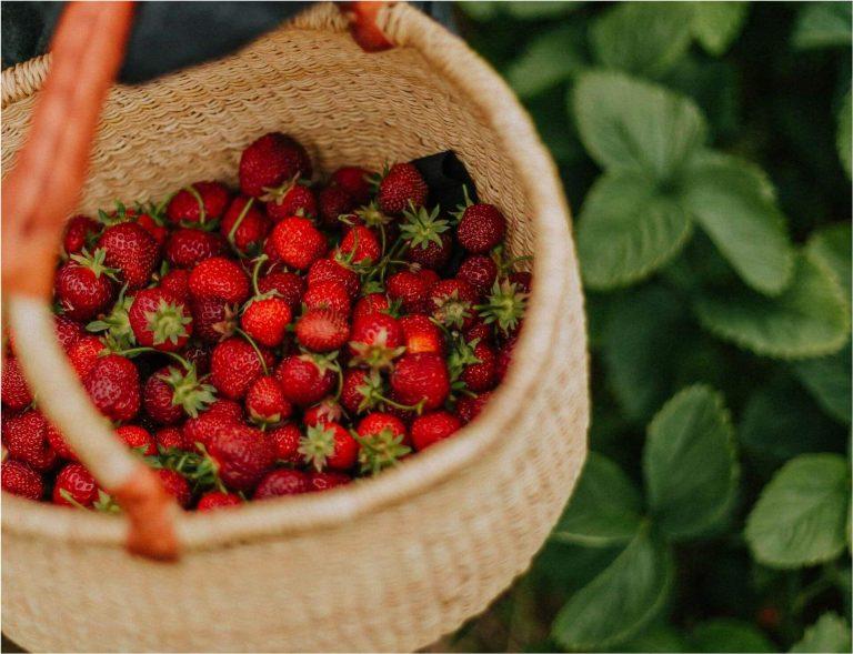 fruit picking jobs queensland