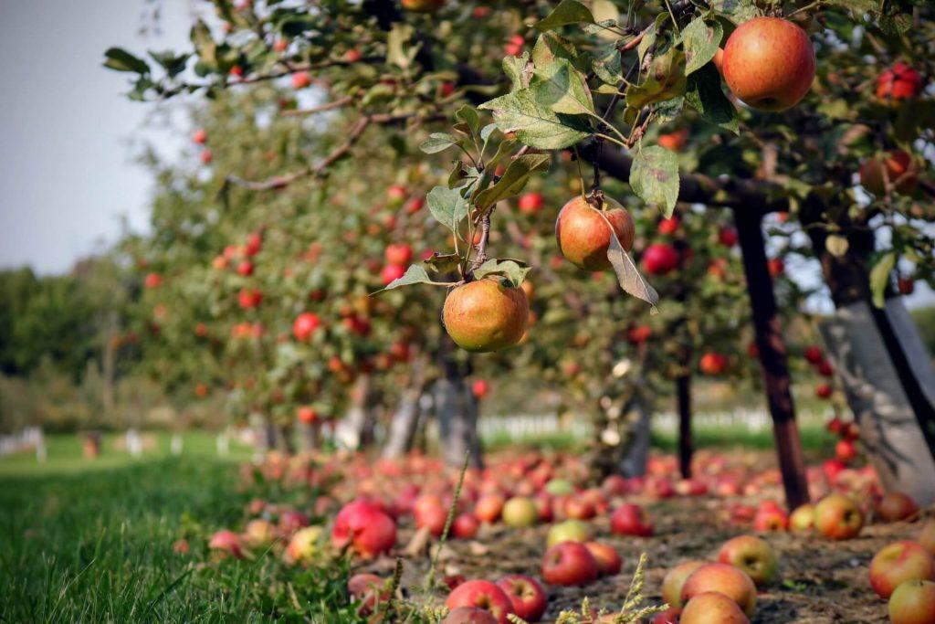 Canada Fruit Picking Jobs