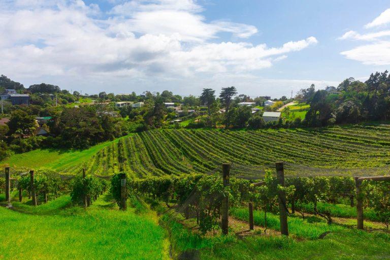 Picking jobs in NZ