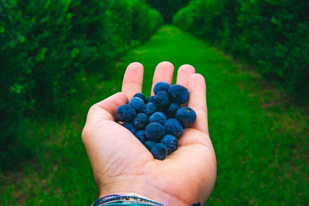 fruit picking jobs Norway