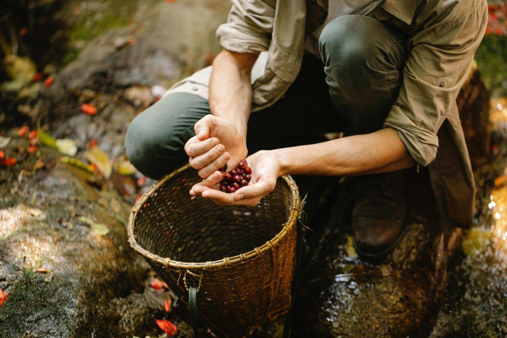 fruit picking jobs in Norway