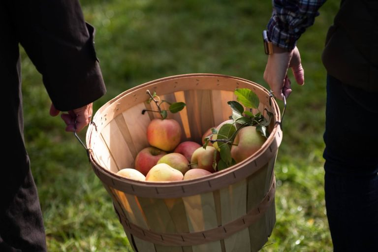 work abroad in Canada as a fruit picker